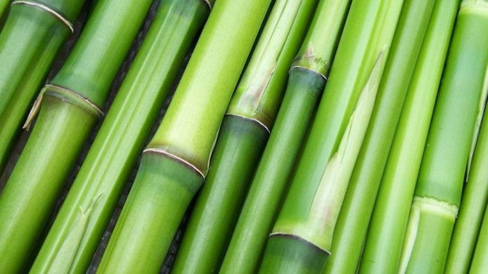 Quel est le meilleur oreiller en bambou naturel et bio ?